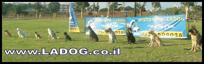 קורס אילוף כלבים למשמעת מול גירויים- LADOG
