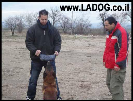 אורן -מאלף כלבים מקצועי בביקור בצ´כיה בבית גידול של כלב רועה בלגי מלינואה