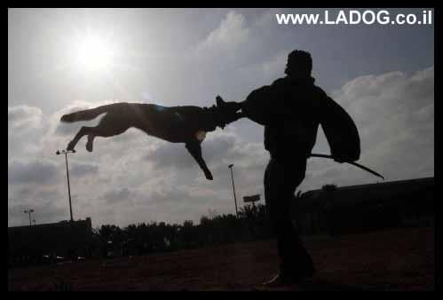ladog- אילוף כלבים להגנה ברמות הגבוהות ביותר אספקת כלבי שמירה,