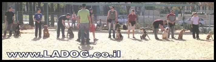 אורן אלעמרי מאלף כלבים מקצועי בהדרכת קבוצת אילוף למתחילים