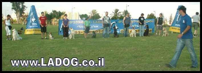 אורן אלעמרי מאלף כלבים מקצועי ומנהל לה דוג בתרגול עם קבוצת אילוף בפארק פתת תקווה