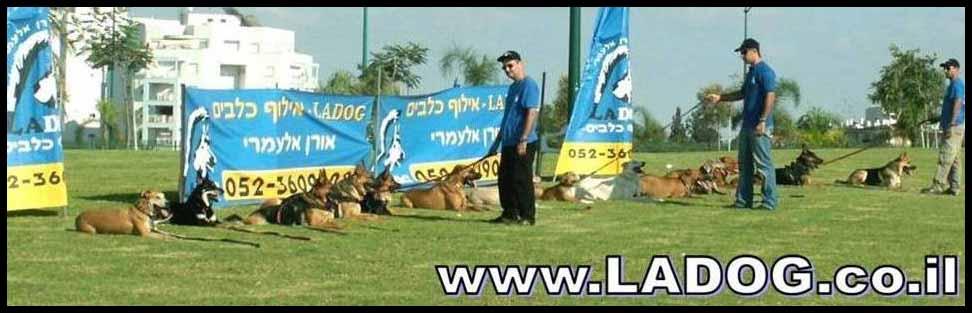 ladog- אילוף כלבים מקצועי למשמעת,אילוף גורים ובוגרים