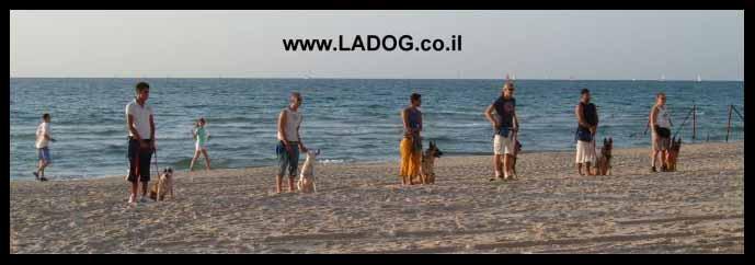 מאלפי הכלבים של LADOG משלבים במסגרת קןרס אילוף כלבים סטנדרטי גם תרגול בחוף הים