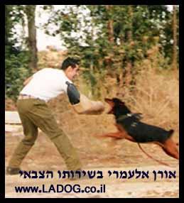 אורן אלעמרי- מאלף כלבים בשירותו הצבאי