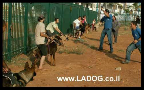 אילוף כלבי שמירה קבוצתי על ידי צוות מאלפים מקצועי של ladog